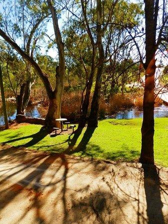 North Para River, Cafe Y, Barossa Valley