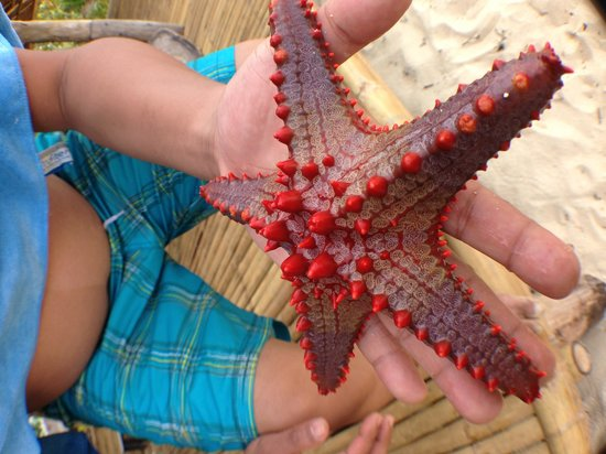 Buruanga Beach: you can find starfish right in front of the beach