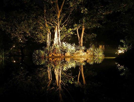 Sigiriya Village Hotel : floodlit pond Sigiriya