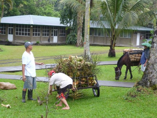Rizal Re-Creation Center: Collecting coconuts.