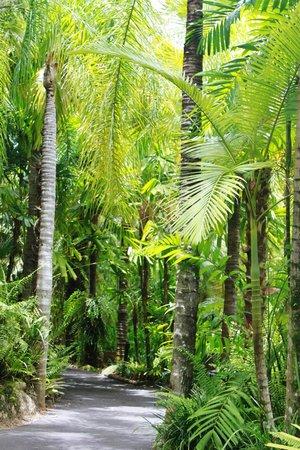 Kewarra Beach Resort & Spa : Stunning foliage