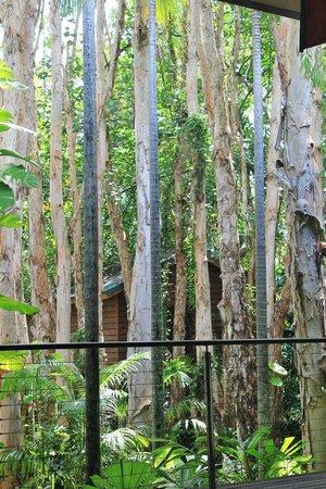 Kewarra Beach Resort & Spa : View from the Paperbark restaurant