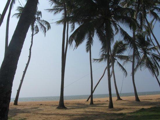 Sanmali Beach Hotel: вид из окна и не только