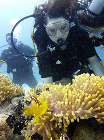 Parrotel Aqua Park : Diving
