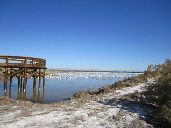 Sonny Bono National Wildlife Reserve: unit 1 viewing platform with migrating snow geese