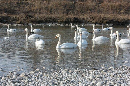 Tierpark Hellabrunn: Лебеди!