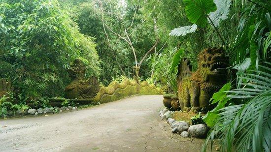 Bali Zoo: Джунгли