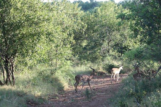 NYATI Safari Lodge: Picture from safari