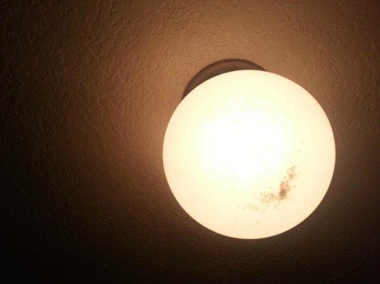 Isola Bella: Dead bugs in light!