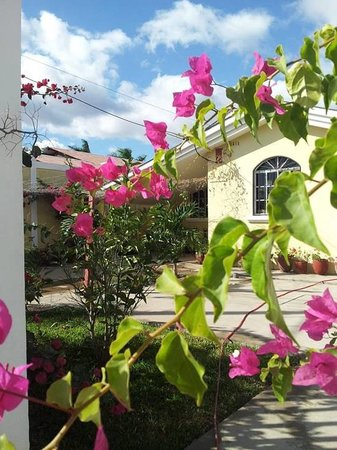 Bed and Breakfast Villa Riviera: Bougainville