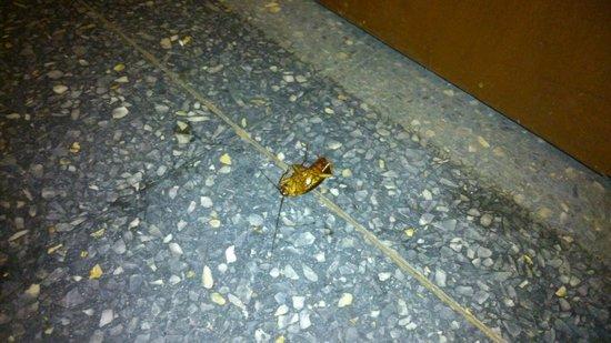 Bali Hai Hotel: Cucaracha