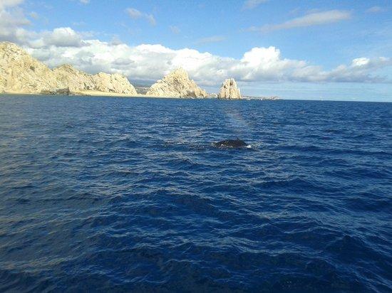 Cabo San Lucas Tours: balene