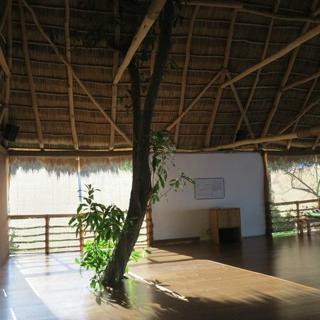 Xinalani Retreat: Jungle yoga studio