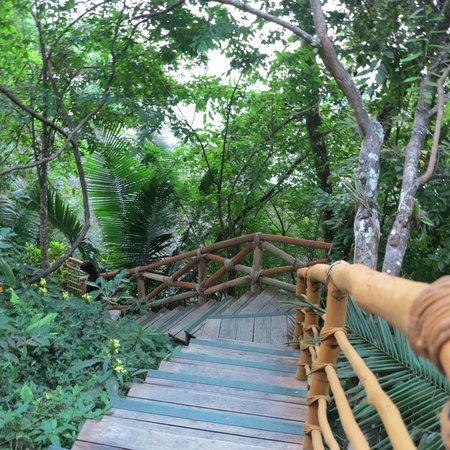 Xinalani Retreat: Jungle stairs
