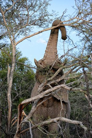 Marataba Safari Lodge: Elephant Evening Meal