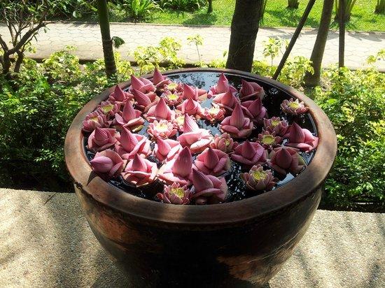 Shinta Mani Club: Lotus flowers