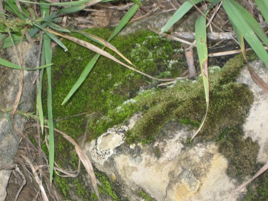 Jardín de los dioses (Garden of the Gods): Moss in GOG