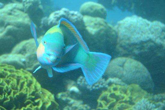 Underwater Observatory Marine Park: этот снимок нам удалось сделать самим,просто фантастика!