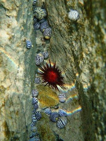 Moon Dance Cliffs: Cool Underwater Life!