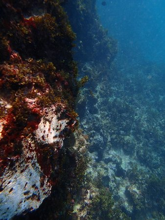 Moon Dance Cliffs: Snorkeling!