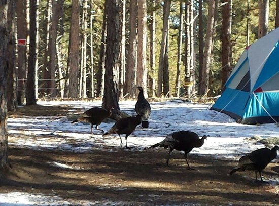 """Fort Welikit Family Campground : Our """"visitors"""""""