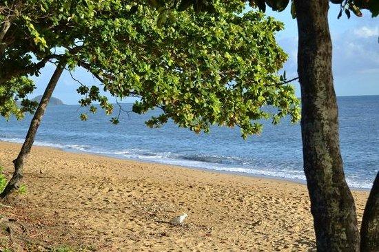 Blue Lagoon Resort: View on the beach