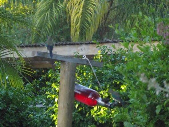 GUBAS DE HOEK meet eat sleep: Bird life in the garden