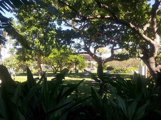 Kaanapali Beach Hotel : Beautiful, spacious grounds!