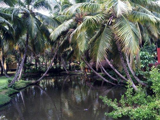 Grand Paradise Samana: vegetation de l'hotel