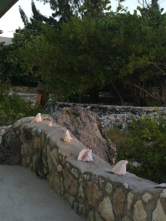 Coral Cove Resort: loved the shells in the walls