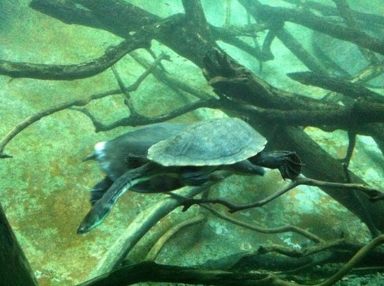 San Diego Zoo: Tartaruga