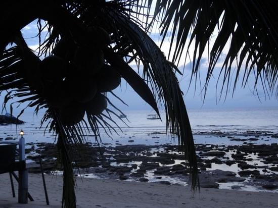 Paya Beach Spa and Dive Resort: la bassa marea...troppe rocce per il bagno