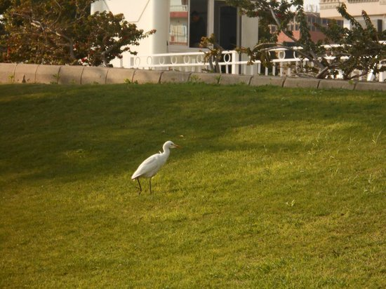 Hilton Hurghada Plaza: Аист