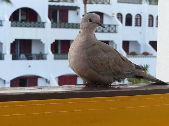Parque Santiago Villas: doves and other birds came and sat on our balcony wall. - cute