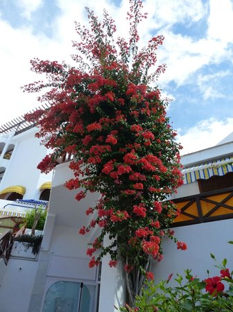 Parque Santiago Villas : flowers.cacti -fabulous in garden areas surrounding the pools