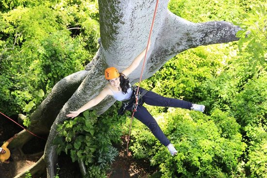 Amazon Tree Climbing : Descida feliz