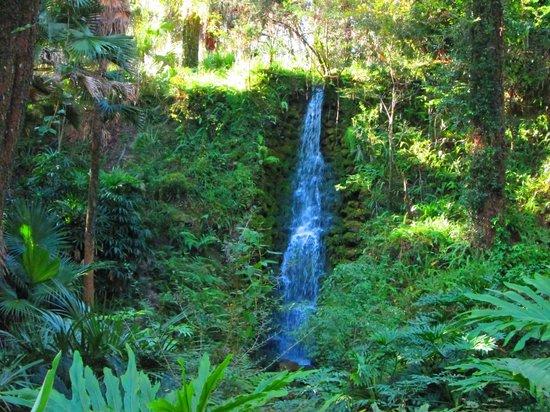 Rainbow Springs State Park - Waterfall