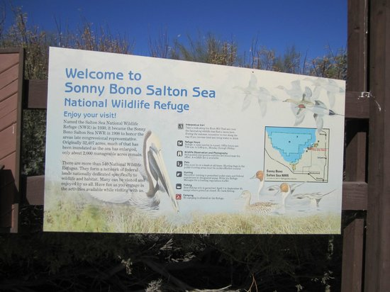 Unit 1 observation deck Picture of Sonny Bono National Wildlife