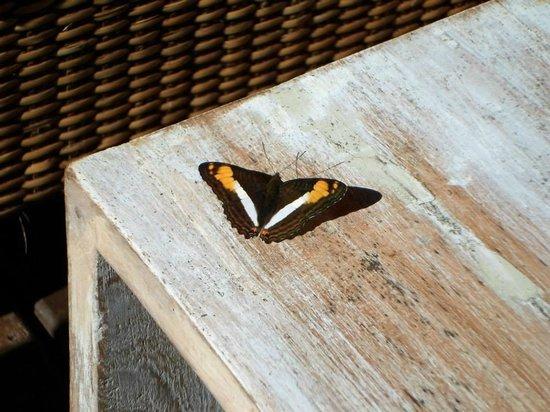 Loi Suites Iguazu: Vista abierta a las piscinas y selva, mientras tomabamos algo se posaban bellas mariposas en la
