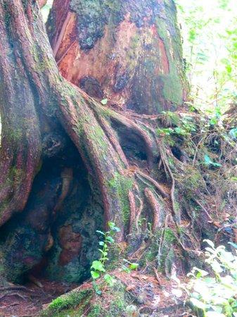 Cobble Wood & Bird Sanctuary Guest Houses: COASTAL RAINFOREST
