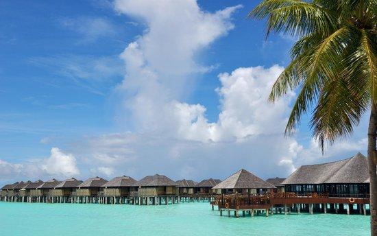 The Sun Siyam Iru Fushi Maldives : Infinity pool