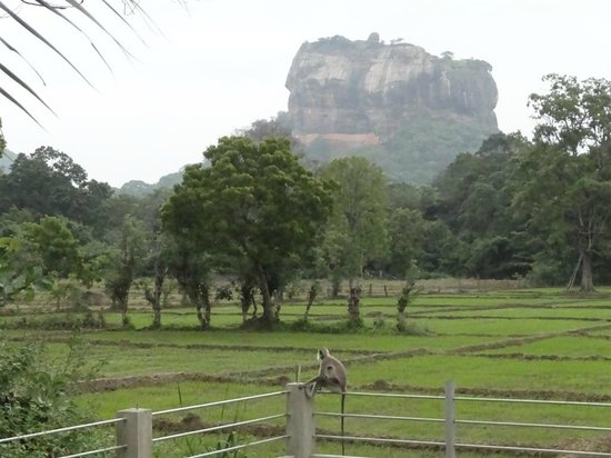 Lakmini Lodge & Restaurant: A view from the hut.