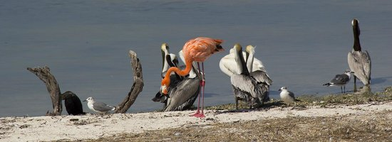 Holbox Hotel Casa las Tortugas - Petit Beach Hotel & Spa: Flamingo
