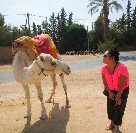 Riad Palais des Princesses : camel kiss