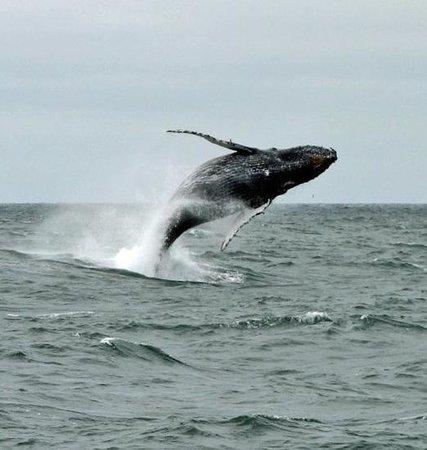 Farallon Islands Whale Tours