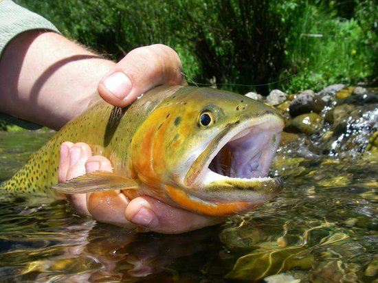 Fly Fishing Outfitters