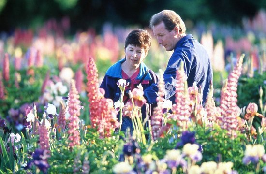Schreiner's Iris Gardens : Glorious spring day among the Iris