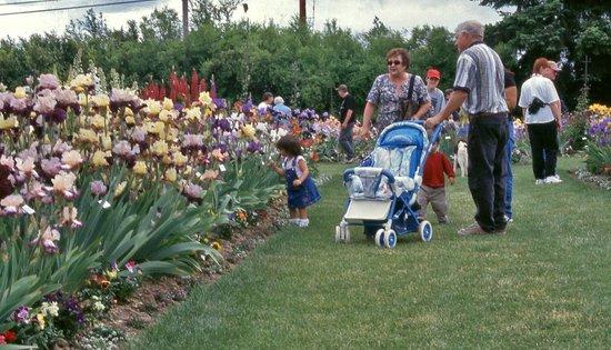 Schreiner's Iris Gardens : Iris Gardens are superb for all generations