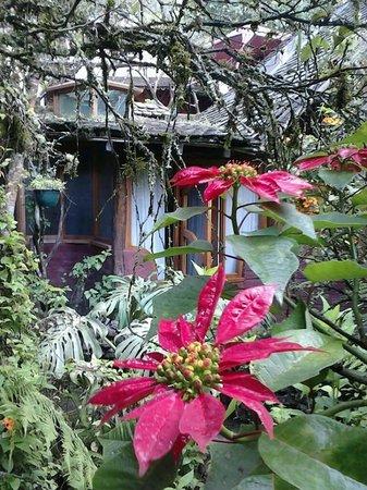 Hosteria Finca Chamanapamba : ¡Increíble vista con la que despertaba!