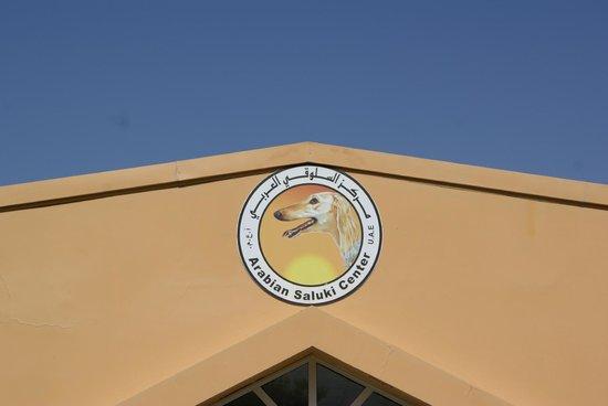 Abu Dhabi Falcon Hospital : All'interno del centro Saluki Center
